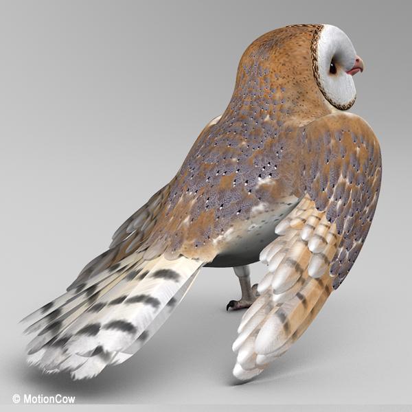 Folded Wing Anatomy Folded dinosaur wings by   Animal Refs ...  Folded Bird Wings