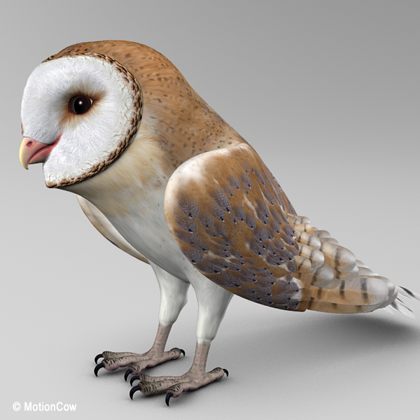 Barn Owl (Folded Wings) – MotionCow