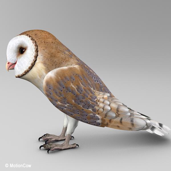 Barn Owl (Folded Wings) – MotionCow