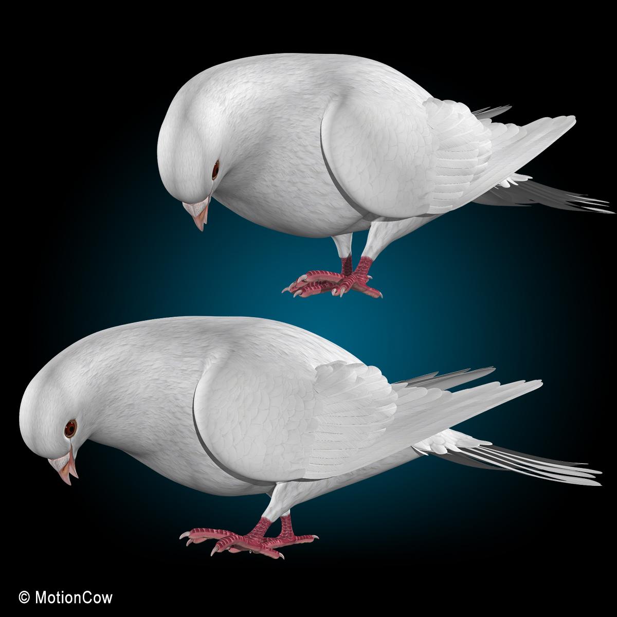 Osprey - BirdWatching  Folded Bird Wings