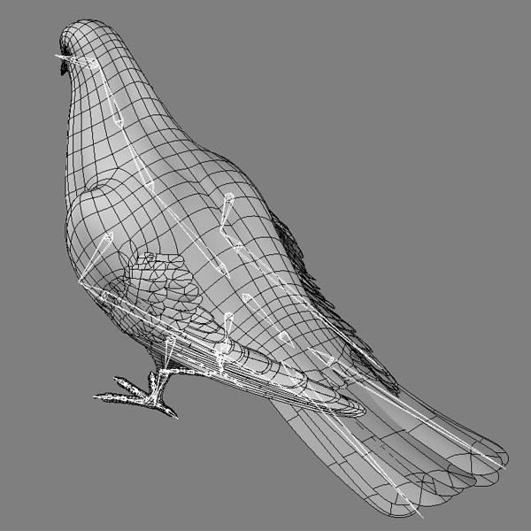 SketchBook Original: How to Draw Wings – Monika Zagrobelna  Folded Bird Wings