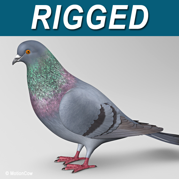 Pigeon products Pigeons Products Pigeons Supplies UK
